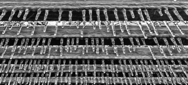 Photograph - Winters Grip by JC Findley