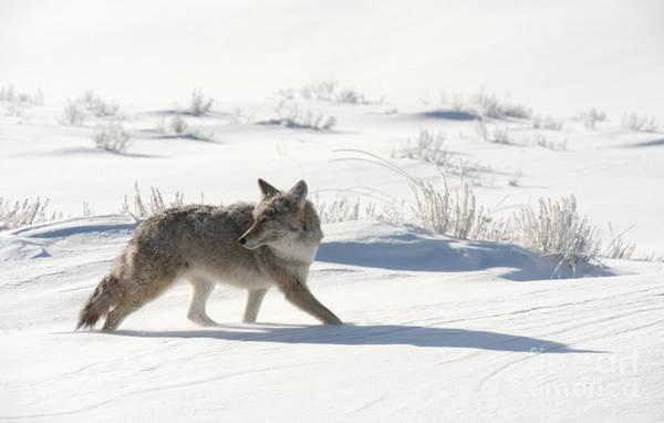 Wall Art - Photograph - Winter's Hunt by Sandra Bronstein