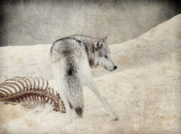 Wall Art - Photograph - Winters Kill by Steve McKinzie