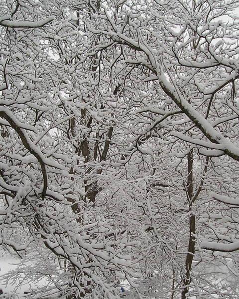 Photograph - Winter's Lace 1 by R  Allen Swezey