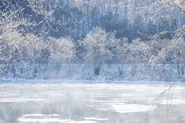 Photograph - Winters Lace by Jim Cook
