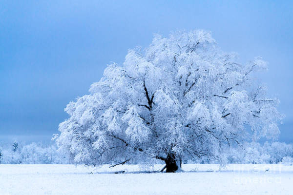 Photograph - Winter's Majesty by Lori Dobbs