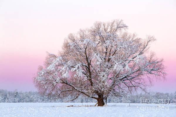 Photograph - Winter's Majesty Morning by Lori Dobbs