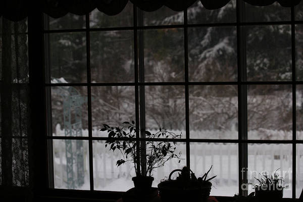 Photograph - Winters Reflection by Linda Shafer