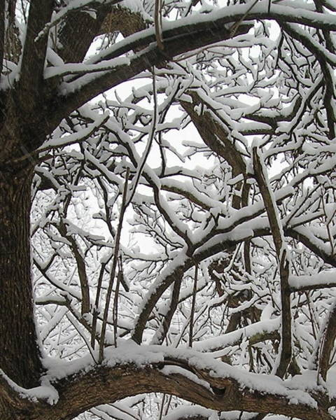 Photograph - Winter's Tapestry  by R  Allen Swezey