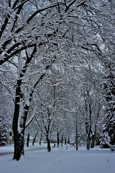 Photograph - Winter's Work by Joseph Yarbrough