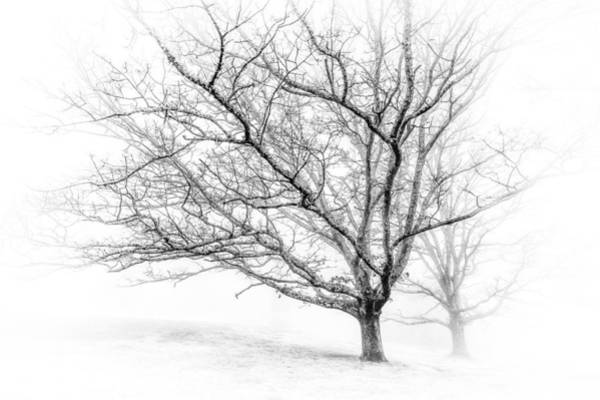 Photograph - Winter's Work by Maria Robinson
