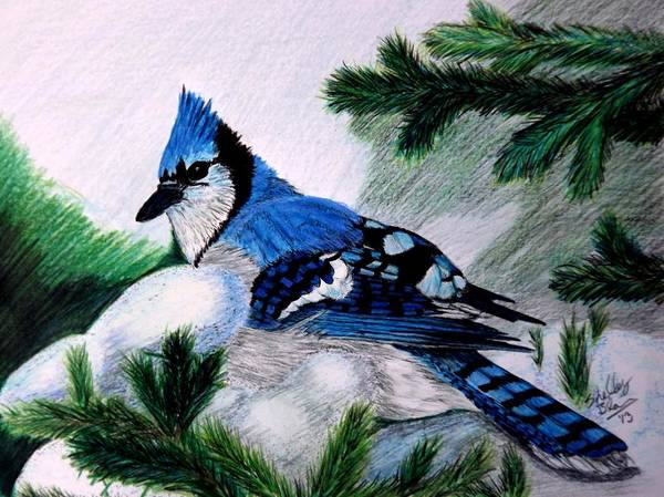 Evergreen Trees Drawing - Wintery Jay by Shelley Blair