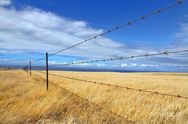 Photograph - Wired Fence South Point By Diana Sainz by Diana Raquel Sainz
