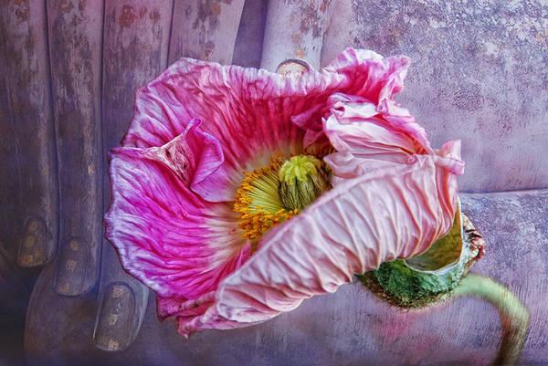 Wall Art - Photograph - Wisdom And Beauty by Joachim G Pinkawa