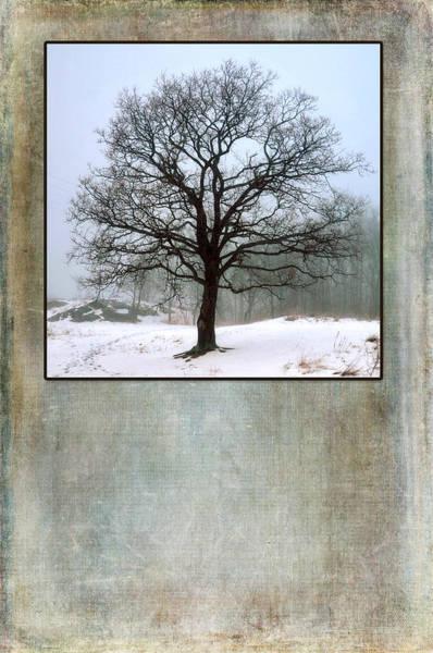 Photograph - Wisdom Tree by Randi Grace Nilsberg