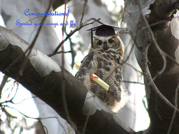 Photograph - Wise Owl by Diana Haronis