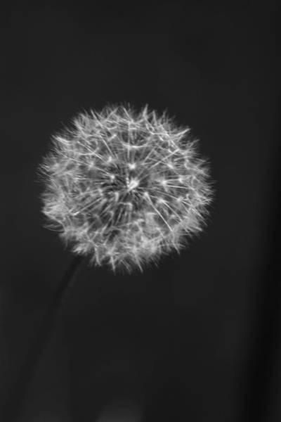 Photograph - Wish by Kelly Hazel