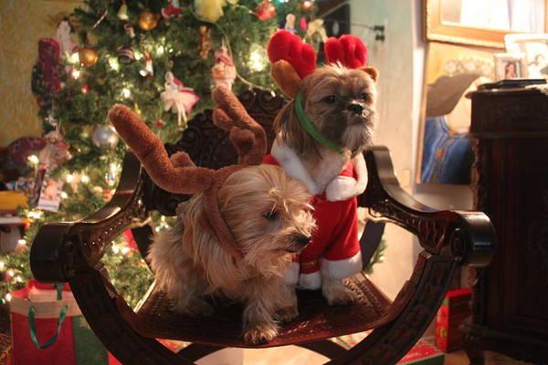 Christmass Photograph - Wishbone And Cody by Pilar  Martinez-Byrne