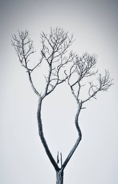 Photograph - Wishbone Tree by Carolyn Marshall