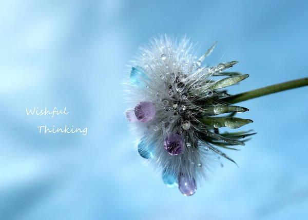 Saying Photograph - Wishful Thinking by Krissy Katsimbras