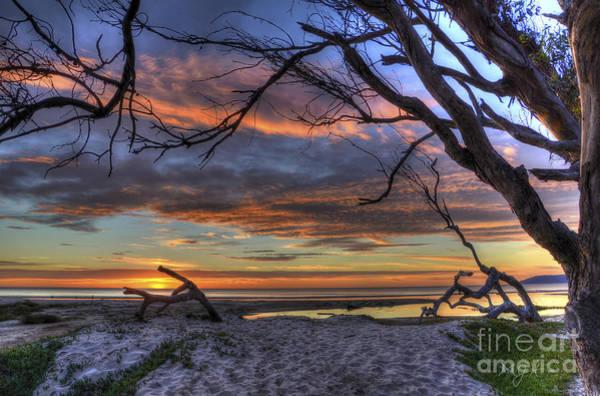 Photograph - Wishing Branch Sunset by Mathias