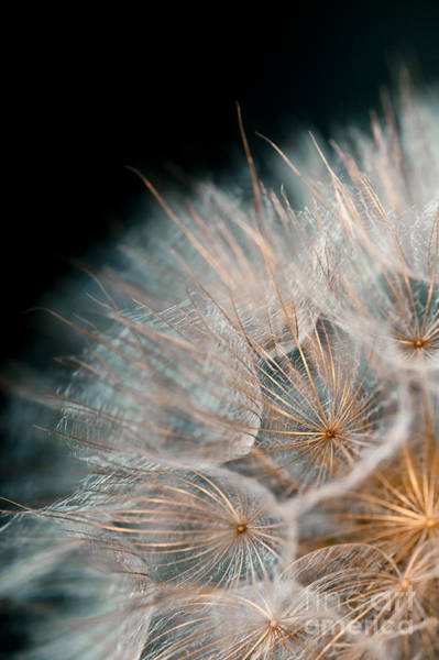 Seed Head Wall Art - Photograph - Wishing For Tomorrow by Jan Bickerton