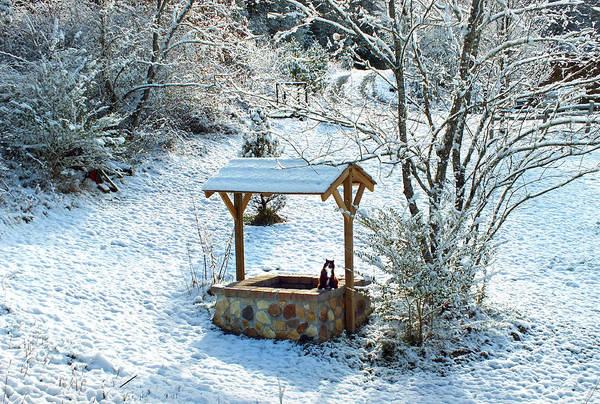 Photograph - Wishing Well In The Snow With Kitty Cat by Duane McCullough