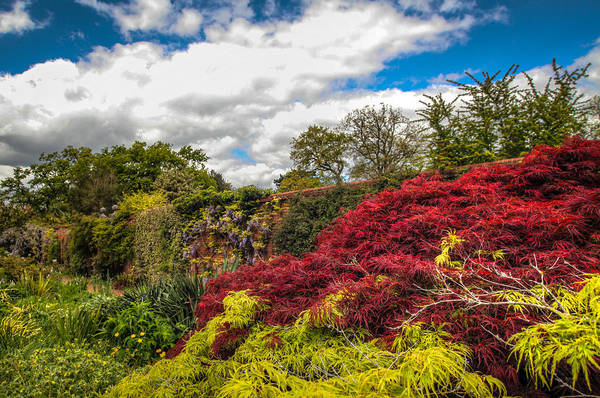 Photograph - Wisley Garden Wall by Ross Henton