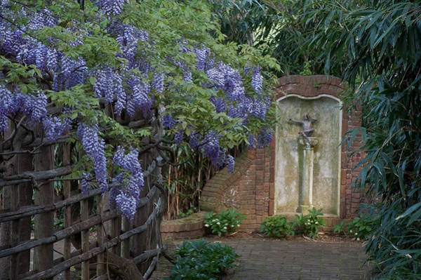 Dumbarton Wall Art - Photograph - Wisteria And Pan by Valerie Brown