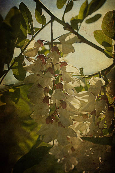 Photograph - Wisteria Cascade by Terry Rowe