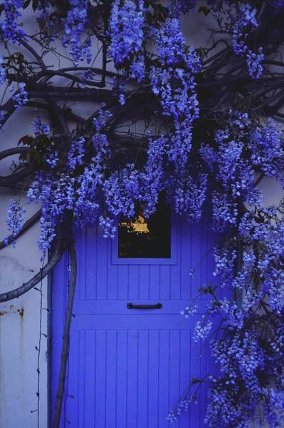 Wisteria Wall Art - Photograph - Wisteria Flowers Blooming Outside House by Jenna Johnson / Eyeem