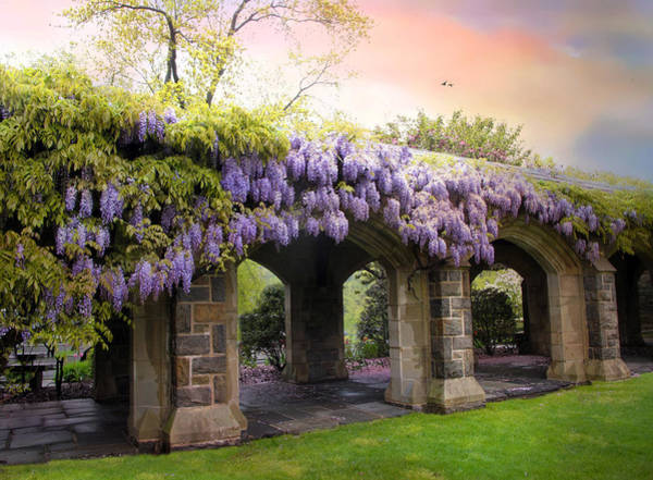 May Photograph - Wisteria In May by Jessica Jenney