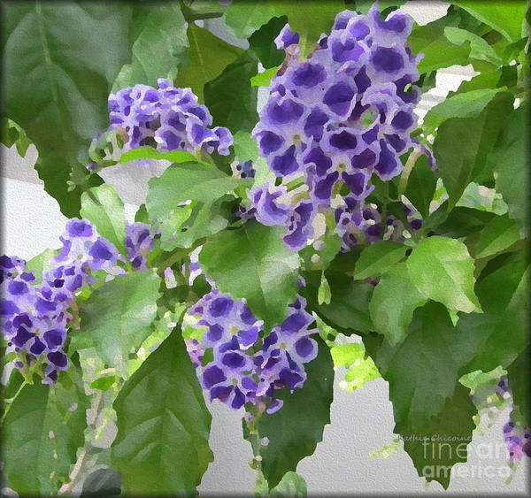 Photograph - Wisteria by Kathie Chicoine