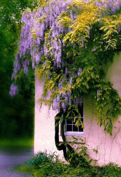 Wisteria Photograph - Wisteria Tree by Jessica Jenney