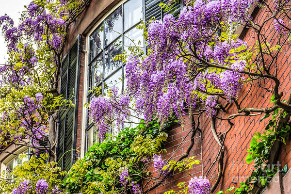 Photograph - Wisteria Windows by Susan Cole Kelly
