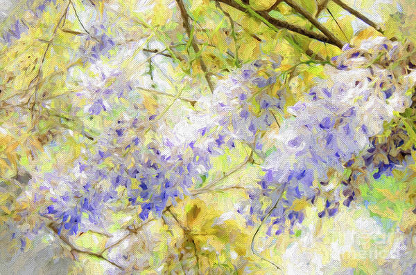 Photograph - Wistful Wisteria 1 by Andee Design