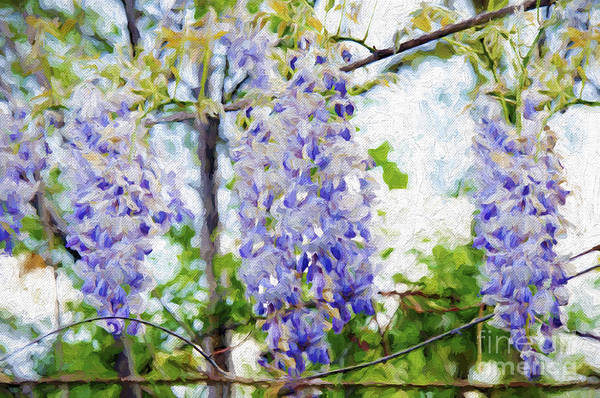 Photograph - Wistful Wisteria 3 by Andee Design