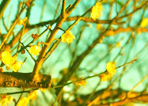 Photograph - Wistful by HweeYen Ong