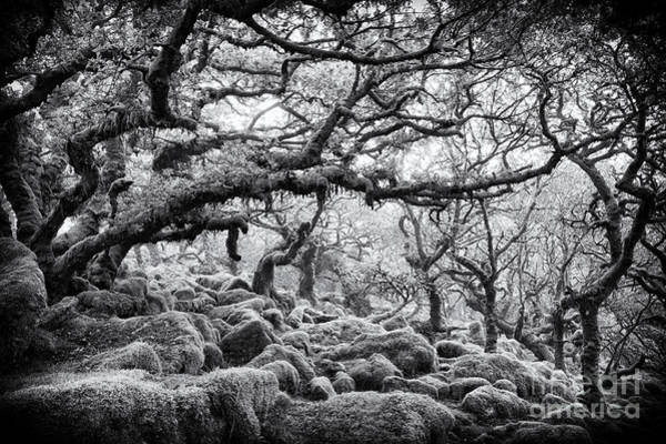 English Countryside Photograph - Wistmans Wood Dartmoor Devon  by Tim Gainey