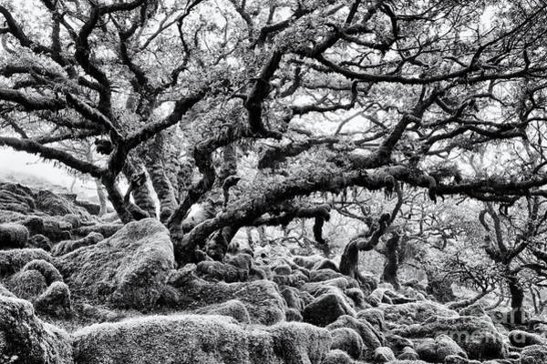 Dartmoor National Park Photograph - Wistmans Wood  by Tim Gainey