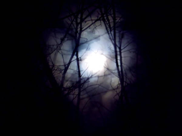 Photograph - Witch's Moon by Wild Thing