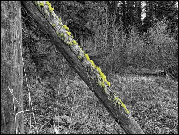Photograph - With A Pinch Of Moss by Susan Kinney