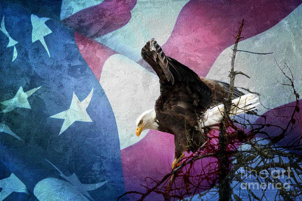 Photograph - With Liberty by Beve Brown-Clark Photography