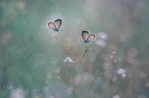 Pair Photograph - With You by Adi Isna Maulana