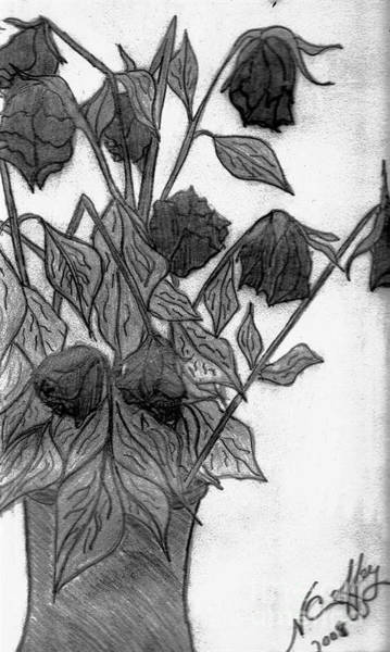 Drawing - Withering Roses by Neil Stuart Coffey