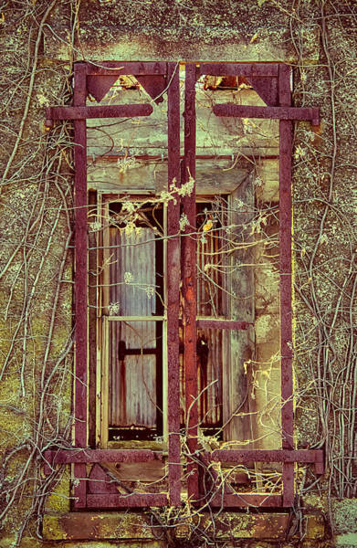 Photograph - Withering Window by Gary Slawsky