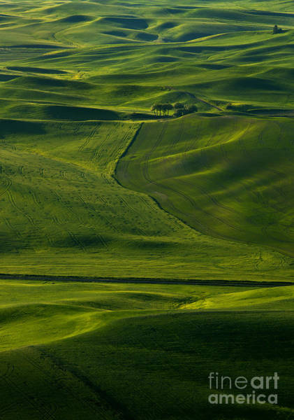 Palouse Photograph - Within A Sea Of  Green by Mike  Dawson
