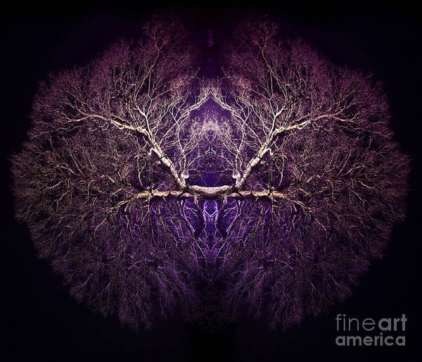 Yggdrasil Photograph - Within by Tim Gainey