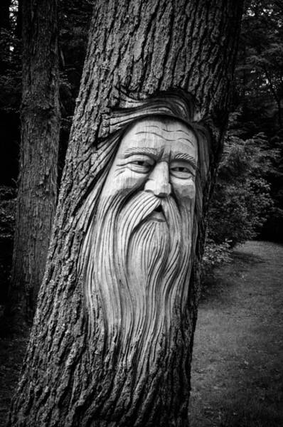 Photograph - Wizard Of The Woods by Guy Whiteley