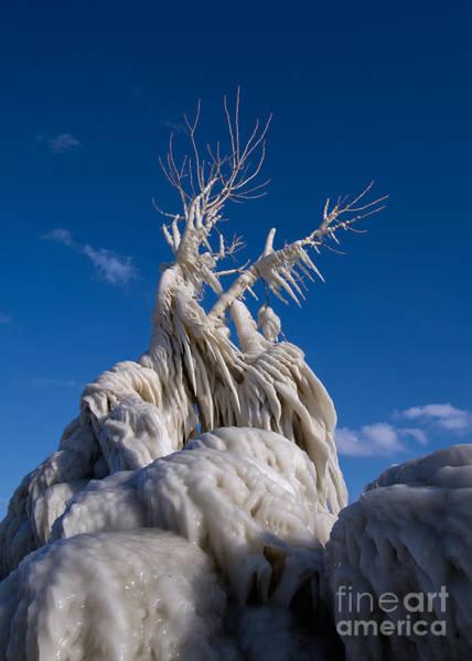 Joshua Clark Photograph - Wizard Tree by Joshua  Clark