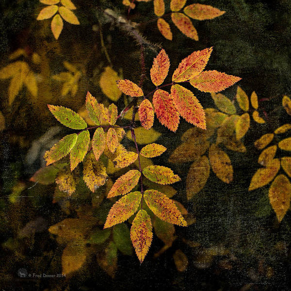 Photograph - Wlid Rose Leaves by Fred Denner