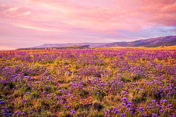 Photograph - Wildflower Sunset by Rick Wicker