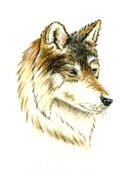 Wall Art - Painting - Wolf #2 by Michael Vigliotti