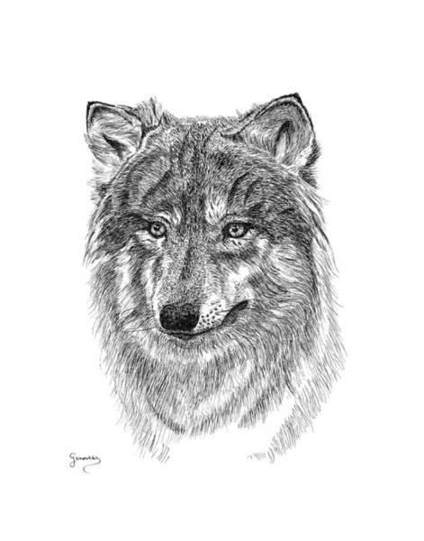 Drawing - Wolf II by Carl Genovese